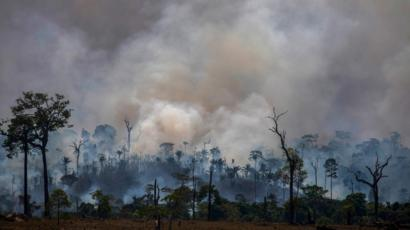 What About The Animals Caught In The Amazon Rainforest Fires