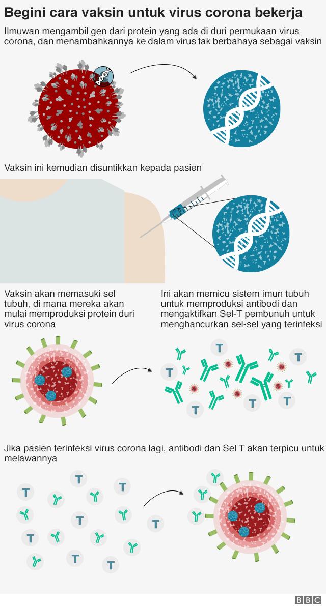 vaksin corona