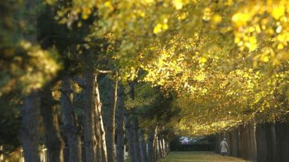 Secrets Of 1 000 Year Old Trees Unlocked Bbc News