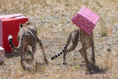 بالصور: الحيوانات أيضا تحصل على هدايا الكريسماس - BBC News Arabic