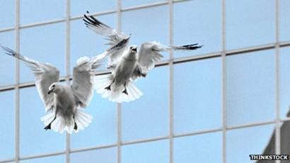 Who What Why: Why are there so many seagulls in cities? - BBC News