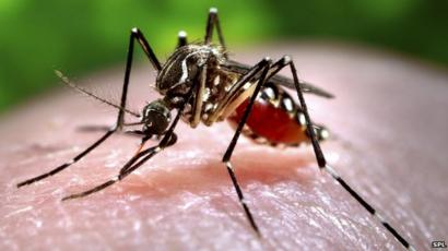Ultrasound Mosquito Repellents Zapping The Myth Bbc News