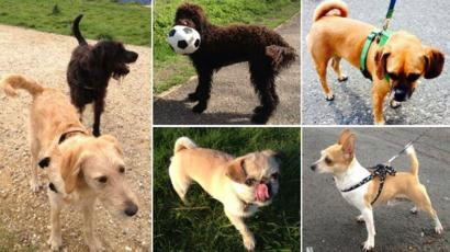 The Strange Profusion Of Portmanteau Dog Names Bbc News