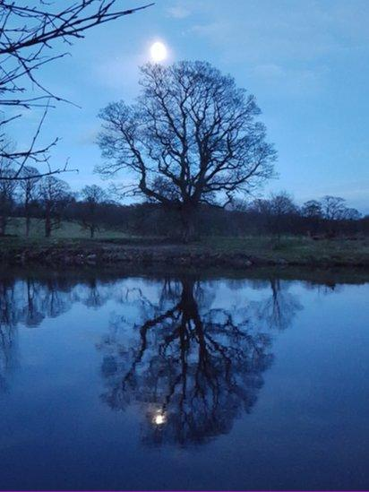 Moon and tree reflection