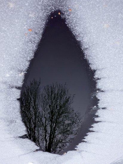 Reflection in a frozen pond