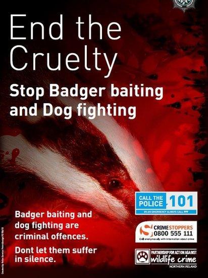 Badger cruelty poster