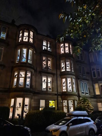 Halloween cats displays in Glasgow tenements