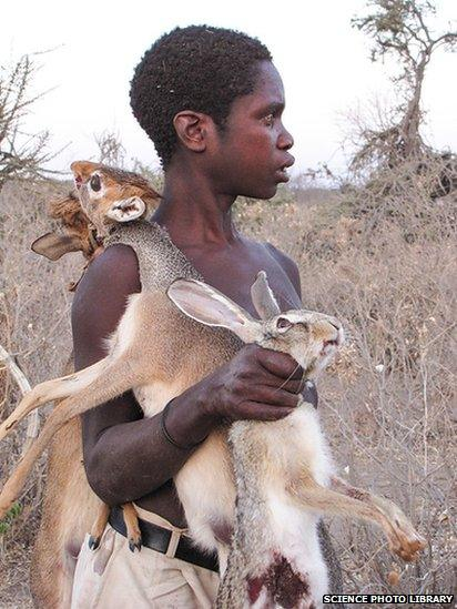 The Hadza hunter gathers rely on hunting and gathering food