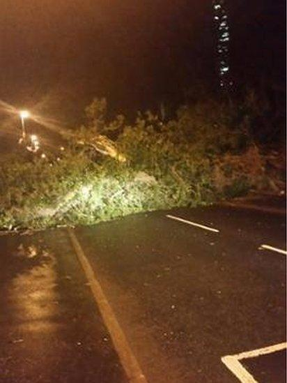 A fallen tree was blocking the Ballybog Road in Dunmurry but has now been cleared