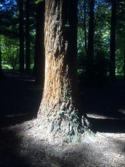 Queenswood Arboretum in Herefordshire.
