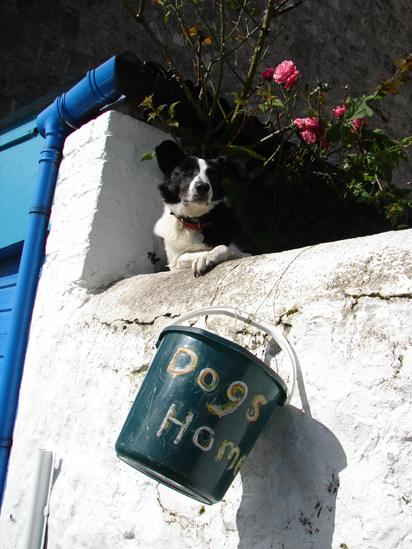 Dog looking over a wall