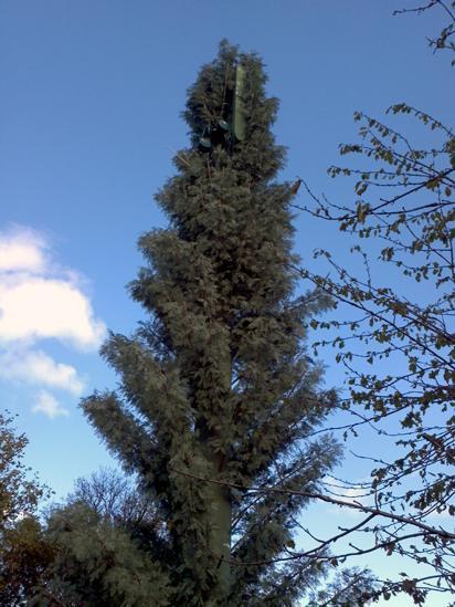 Mast which looks like a tree