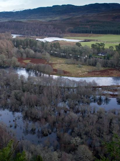 River flooding surrounding forest