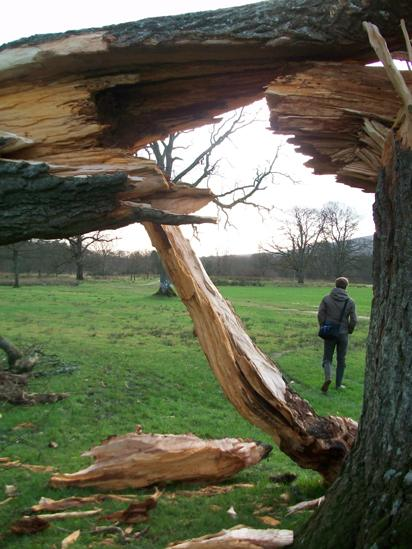 Fallen tree with a man walking in the background