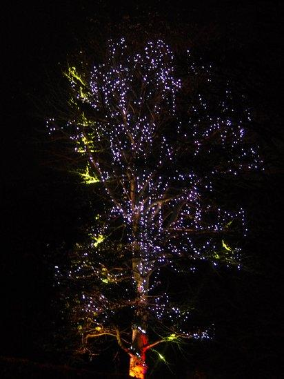 Tree covered in lights at night