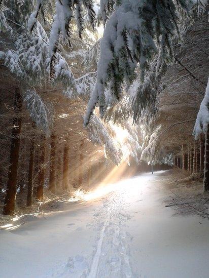 Sunlight streaming through trees at Glentress