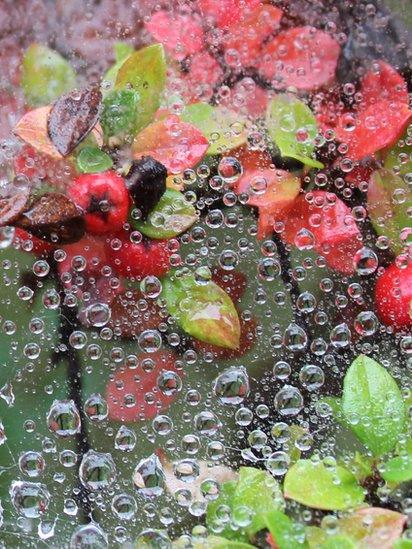 Water droplets on spider webs