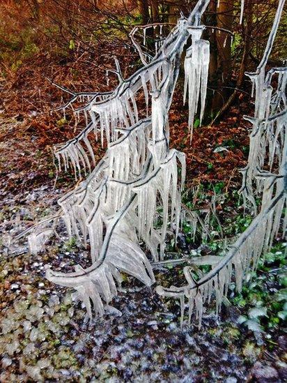 Icicles on a tree
