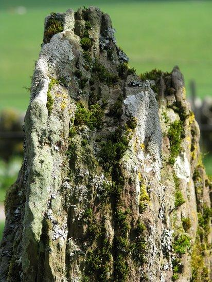 Rock covered in moss