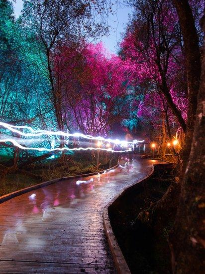 Lights in a forest
