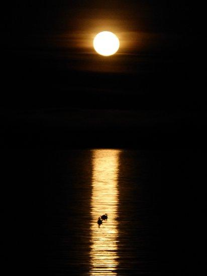 Moonlight over Whitiing Bay