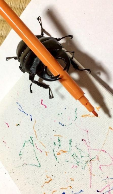beetle art sweet and curious drawing beetle wins hearts online
