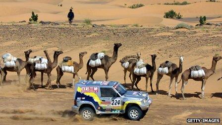 Rally driver speeds past camel train