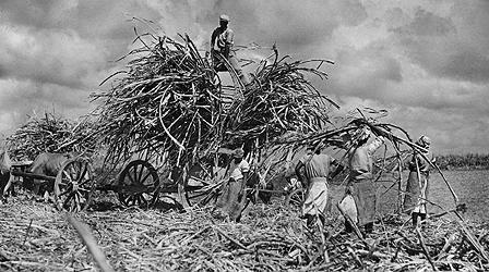 Sugar plantation workers