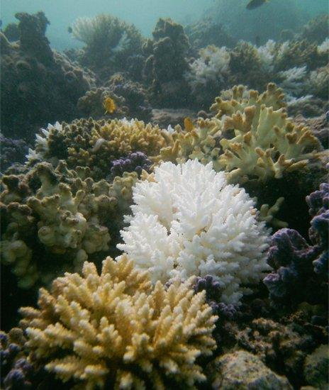 Striking difference of bleached and healthy coral