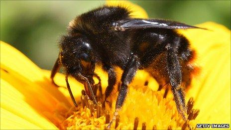 A bee pollinating a flower