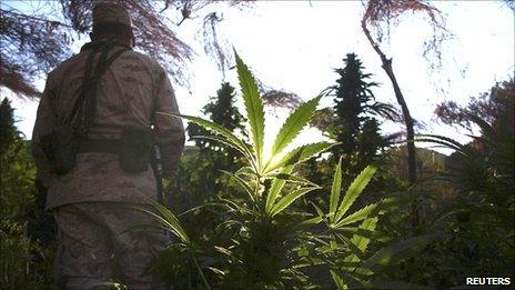 A soldier stands among marijuana plants in Valle de Trinidad, Mexico