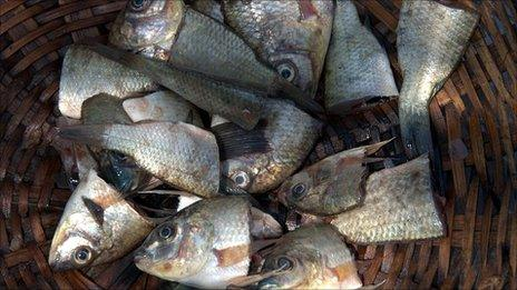 Fish heads in a basket