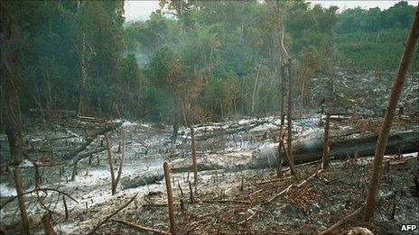 Rainforest slash and burn agriculture AFP/Getty