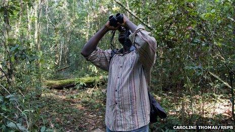 A man with a binoculars at the bird park in Sierra Leone (archive shot)