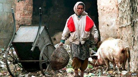 Dalit sweeper woman walks by a pig at a dump
