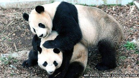 Tokyo's panda Shin Shin gives birth at Ueno zoo - BBC News