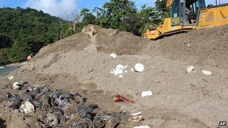 A Ministry of Works employee operates a bulldozer next to destroyed leatherback turtle eggs and hatchlings on Grande Riviere Beach in Trinidad