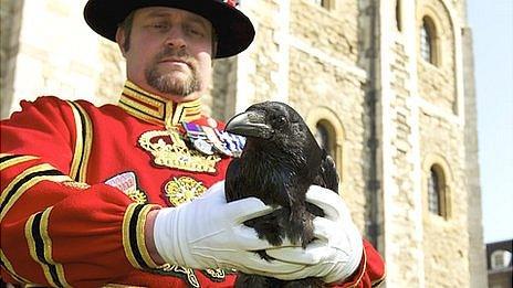 Chris Skaife, the tower's raven master