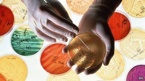 antibiotic research