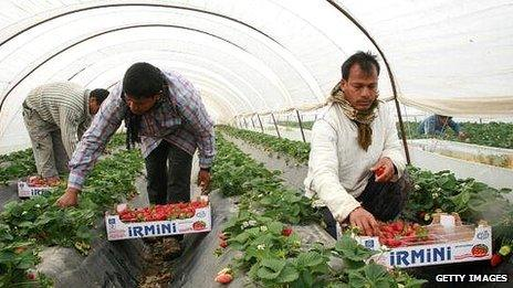 Migrant workers at strawberry farm in Nea Manolada