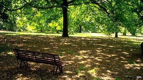Sunny scene in parkland