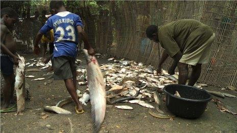 Fishermen empty bucket of fish