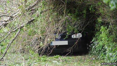 Fallen tree, Plympton St Maurice, 15 May 2013