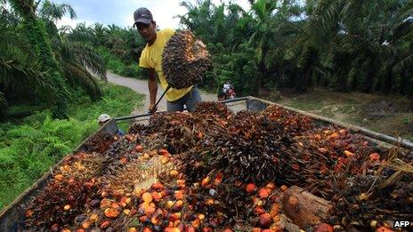 A worker at a palm oil plantation
