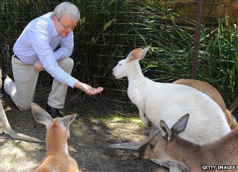 Kevin Rudd feeds kangaroo
