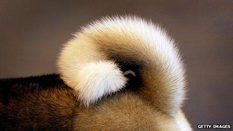 Dog's tail