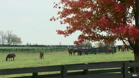 Horses are seen grazing in a pasture in Kentucky