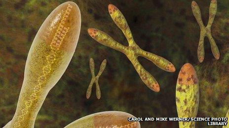 telomere at the end of chromosomes