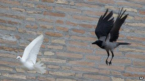 A dove is chased by a black crow in St Peter's Square at the Vatican