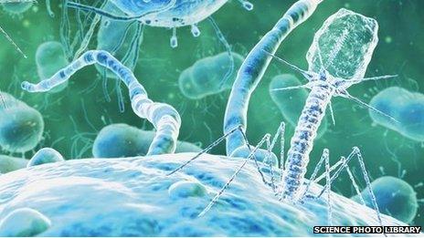 Bacteriophage virus